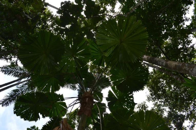 cape trib trees